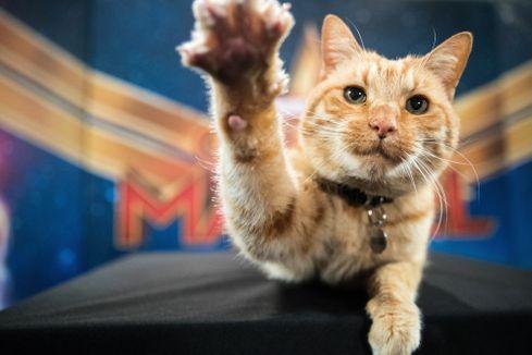 New Captain Marvel Pops Involving Spoilers Popvinyls Com